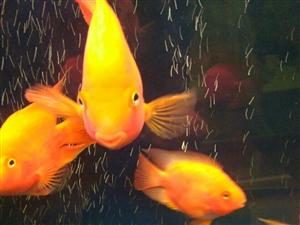 家居养鱼也是一道亮丽的风景
