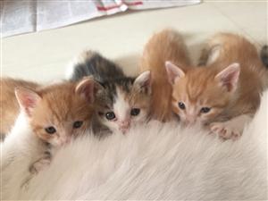 送三只奶猫