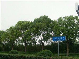 美高梅注册县人民政府政务服务中心