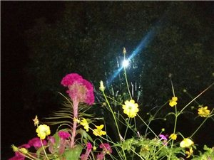 仲秋――桐城赏月