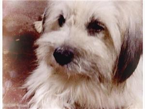 尋找愛犬德芙