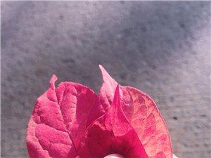 谁知道这是什么树叶呢??
