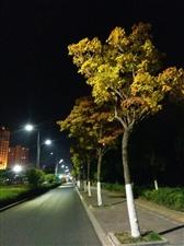 夜晚的霓虹灯闪烁