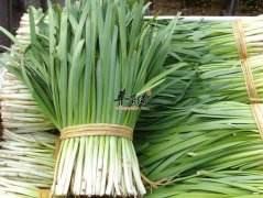 系列养生食补一蔬菜篇(韭菜)