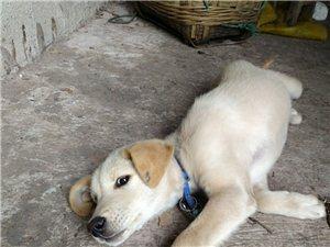 养狗的有木有:请联系我,不要钱,实在是喂不了那么多。