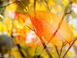 秋:且行且惜,且惜且念