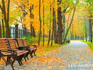 秋,一个浪漫的时节!却总让人惆怅中憧憬着远方