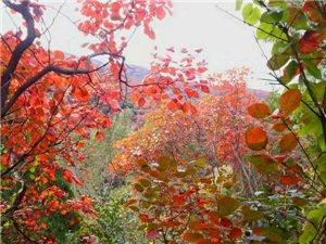 齐河鲁风户外10月21日济南红叶谷赏红叶休闲赏景一日游