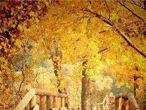 在�@��陪著�魅~�h零的晚秋,才知道你不是我一生的所有,�然又回首,是���的笑容,那多少往事�h散在�L中。