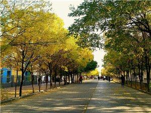 魅力嘉峪关,城市花园,最适合居家养老地标城市。