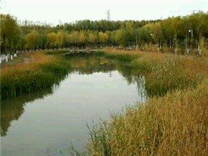 这就是讨赖河边上的景色,航拍会更加精彩…