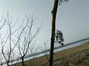 """天长市川桥河畔""""田园农村民房三间""""对外转让、空气好、环境优、价格低、实用修身养性、赏湖观景的最佳去处"""