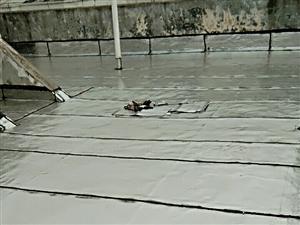 专业做防水,承接大小防水工程,平房,楼房,瓦房,卫生间,地下室,水池,消防池,以及电梯井堵漏等,各