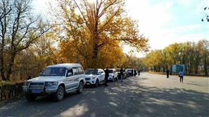 齐齐哈尔私家车俱乐部成员到明月岛开展义务劳动,手动点赞