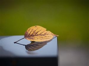 感受湄潭的秋