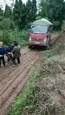 安岳县朝阳乡二村一社5组乡村公路4月份村干部就收款了,到目前还没修好,说的是修好公路卖柠檬,现在呢?