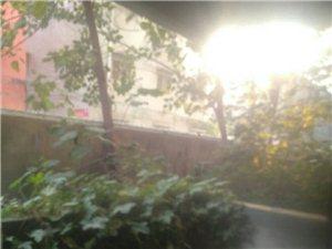 虞城立业家园3室2厅2卫130平低价出售送户外花园