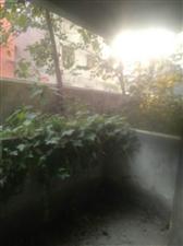 澳门威尼斯人游戏网站立业家园3室2厅2卫130平低价出售送户外花园