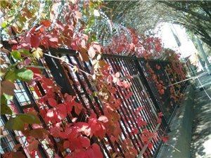 霜叶红于二月花晚秋花分外惹眼