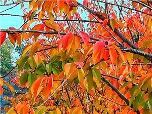 秋冬交替美如��!