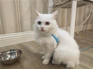 杂乱无章:大白不是甜品,是一只流浪猫。