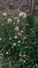 生活处处有美景哟,只要你是细心的人,就能发现美一株路边的野草开的花,也能拍出唯美的样子当然更重要的是