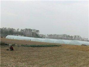 农民的种植模式正在转变