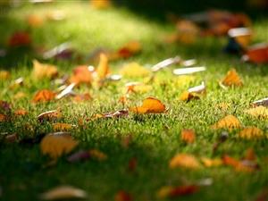 同题诗歌《怀抱秋天》展示