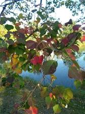 秋天童话般的色彩