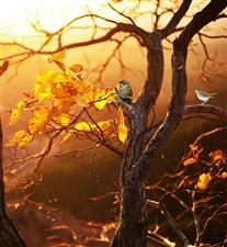 树与叶的对话