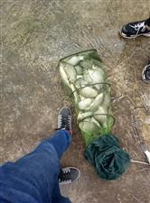 上周末去钓钓鱼,收获了二十斤鲫鱼