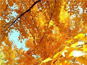 自然色彩就是风景,有规模的自然色彩就是好风景!