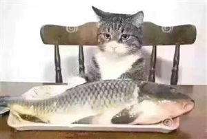 如果自己不够强大,再喜欢的东西放在你面前也无能为力,只能这样乖乖的看着。这就叫:心有鱼,而力不足!