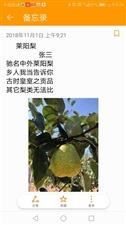 莱阳的茌梨