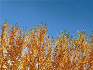 秋,街边随拍。。。。
