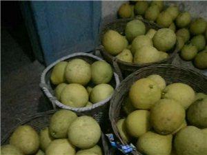 十几年老树真龙柚