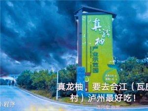 (迈阿蜜)在线:合江真龙柚(泸州最好吃)!