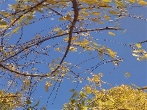 �碜苑��I的照相技�g,但是真的很好看,湄潭的每一��地方都是我��一起走�^的回��,�P芯