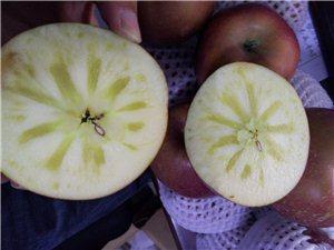 好久没晒我的苹果了