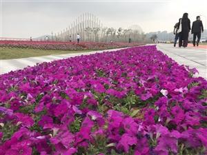 """珠海人真幸福,珠海版""""上海外滩""""亮相!靓过情侣路!就在……"""