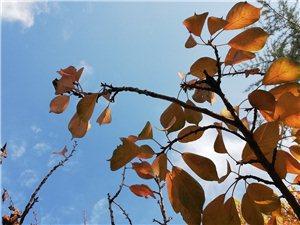 秋风萧瑟天气凉,草木摇落露为霜。秋已去冬渐来