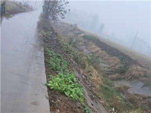 宋店乡六里村官塘路,路两边被挖种菜,有人管吗?