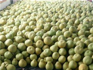 个大汁多味美的真龙柚,自己种的漂亮吗?