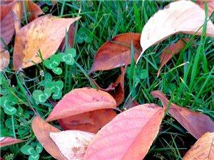 落叶之美何来?来自色彩,来自形态,来自思考。