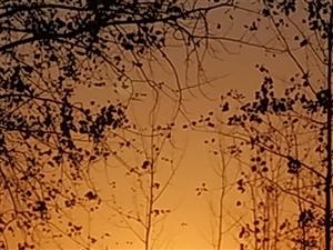 夕阳无限好只是近黄昏