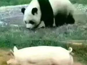 衣服很重要熊猫被宠,猪被捅,同样好吃懒做,只因行头不一样,命运却截然不同。所以说:出来混
