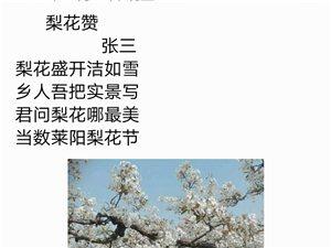 最新注册送体验金网址梨花节