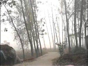 今天早上的雾有点大……