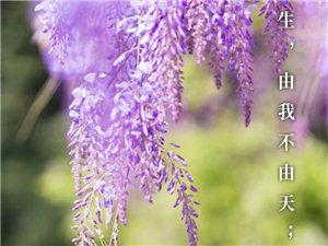 人生有三样东西是无法挽留的:生命、时间和爱,所以你能做的就是去珍惜。岁月难饶,光阴不逮,幸福并不复杂