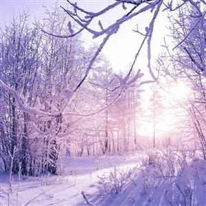 小诗一首:雪-大草原
